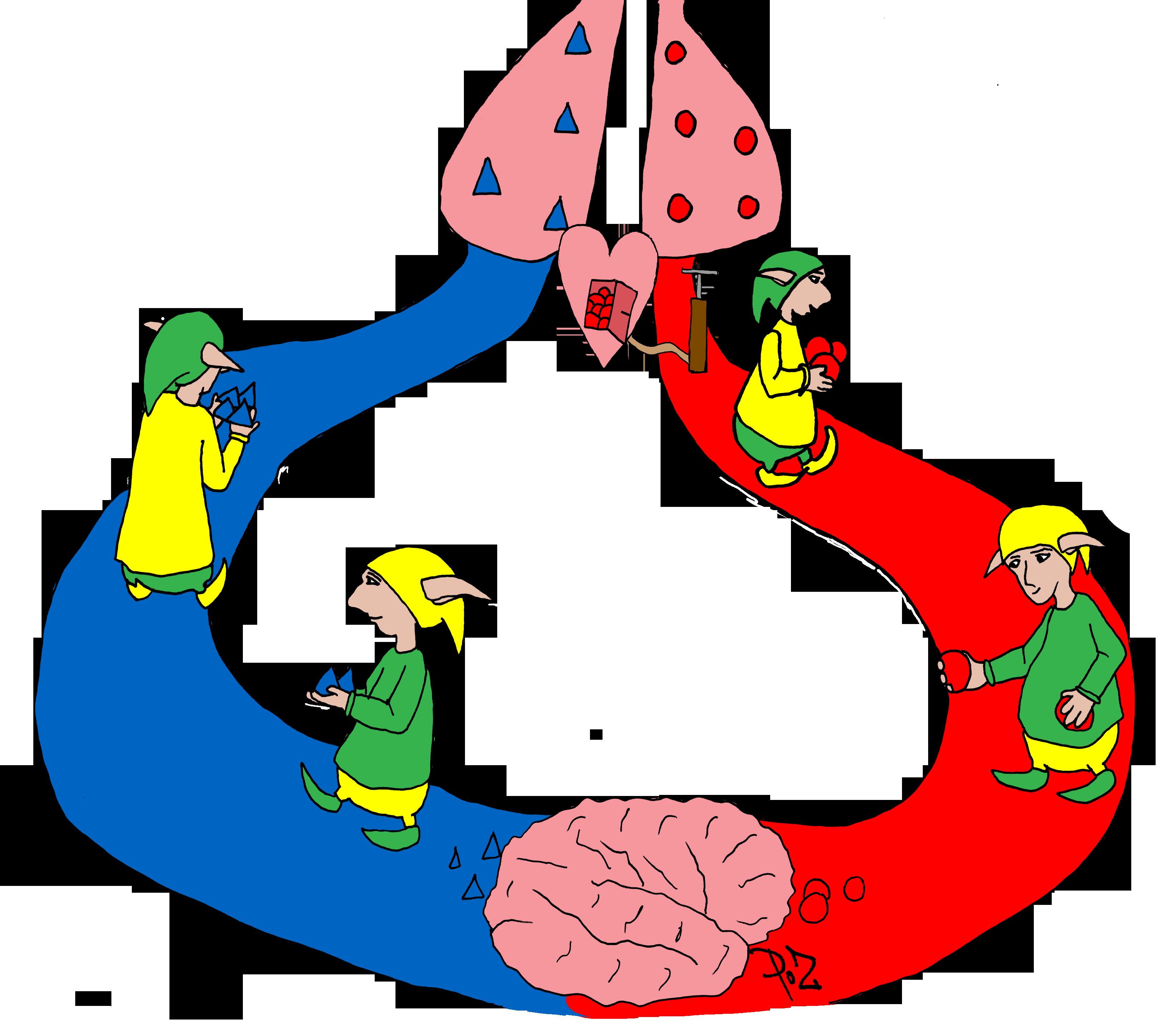 La circulation sanguine ~ La Classe des gnomes