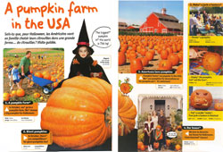 A pumpkin farm in the USA